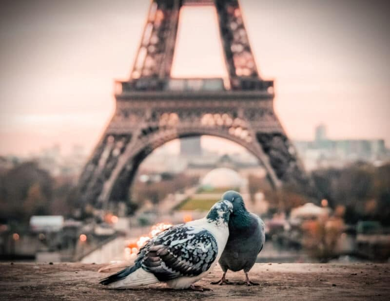 Birds in love paris